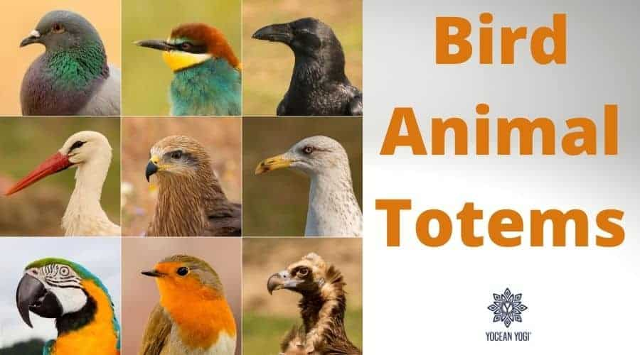 The Bird Spirit Animal and Totem Meanings