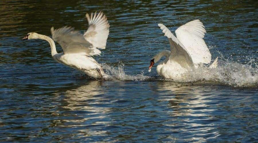 Bird Spirit Animal Negative Traits