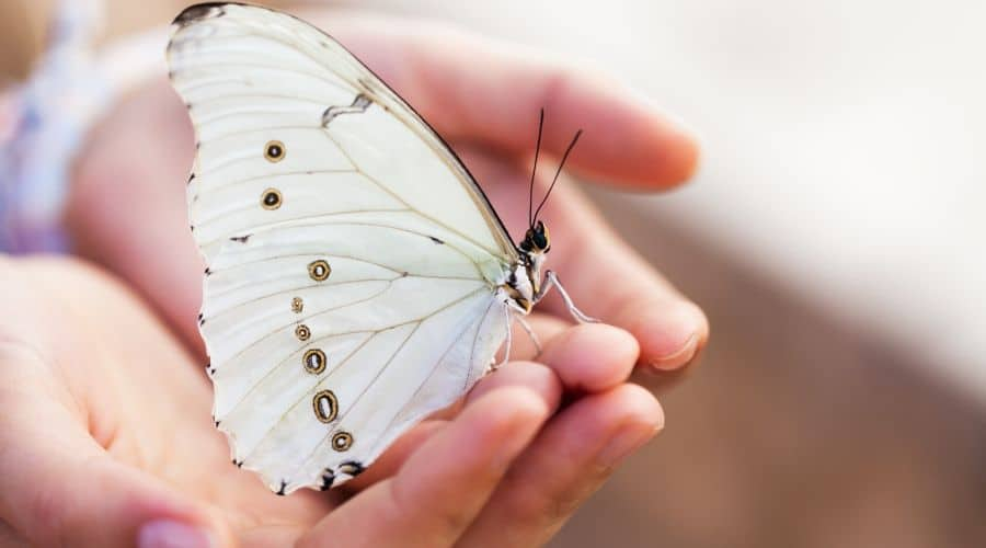 Deceased and butterflies - meaning and spiritual symbolism