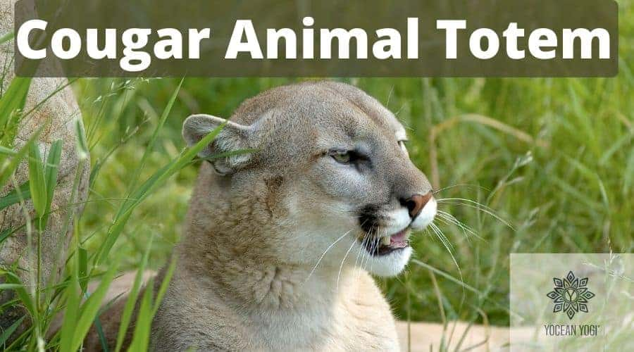 Most Common Cougar Spirit Animal Meanings