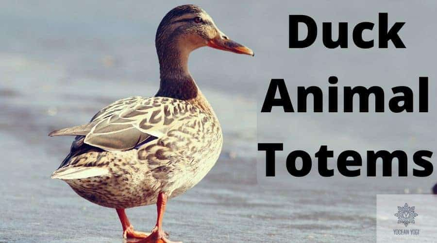 Most Common Duck Spirit Animal Meanings