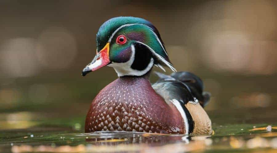 Bad things about the duck spirit animal