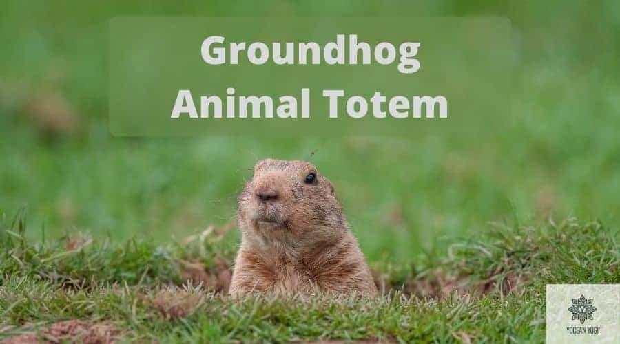 Groundhog Spirit Animal and Totem