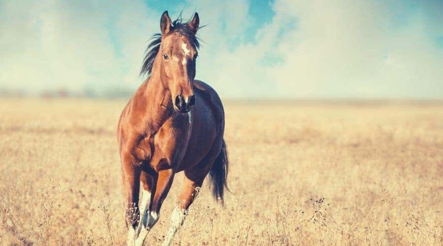 Most Common Horse Totem Animal Meanings