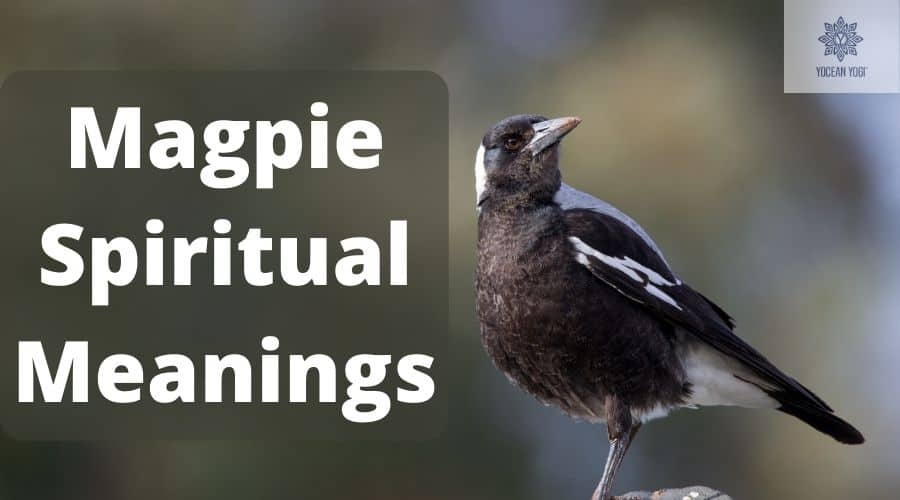 Most Common Magpie Spirit Animal Meanings