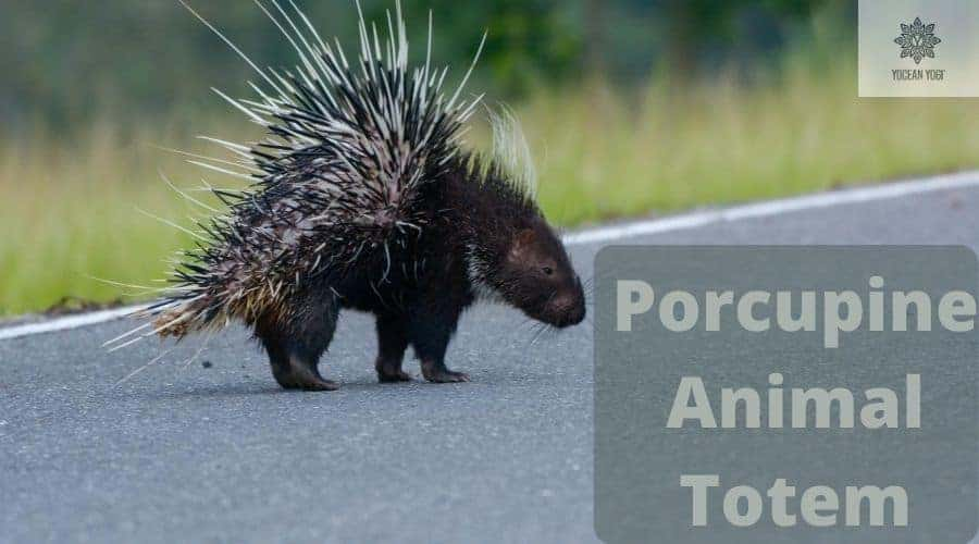Porcupine Spirit Animal and Totem Meanings